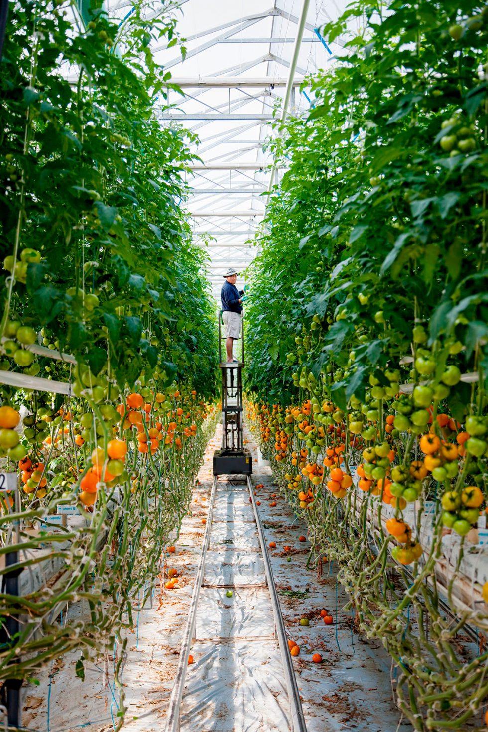 Calgary Onsite Photographer. Gentleman tending an indoor garden.