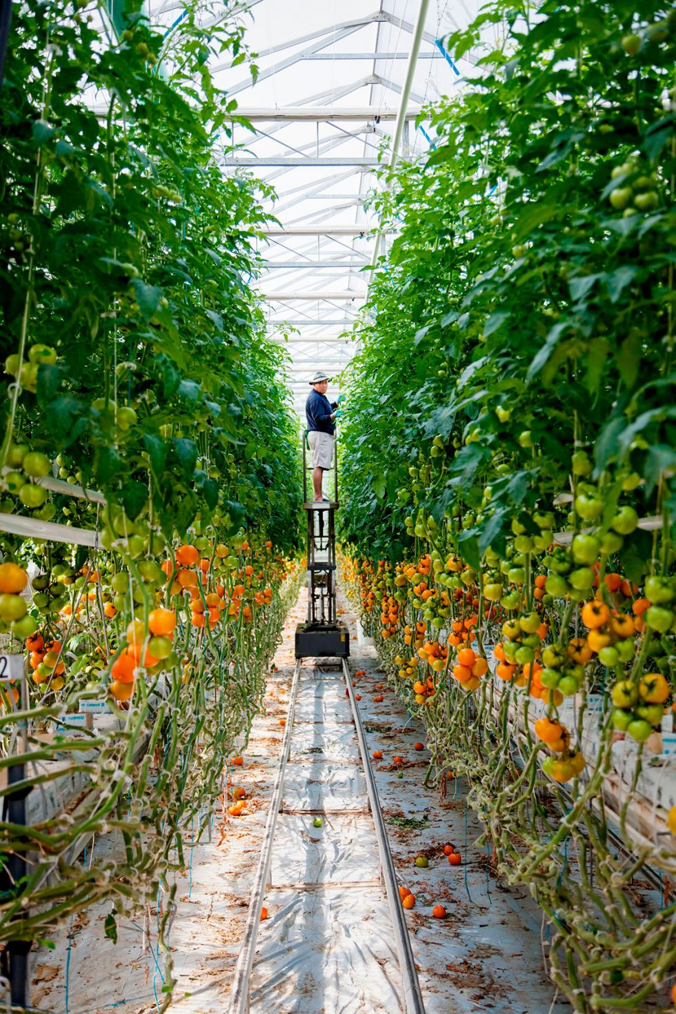 Calgary Onsite Photographer. Gentleman tending indoor garden.